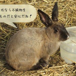 ウサギに適している飲み水
