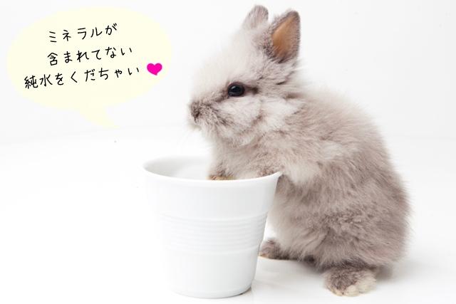 ウサギの飲み水は水道水が良いのか