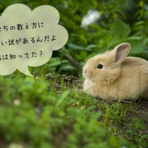 ウサギの数え方