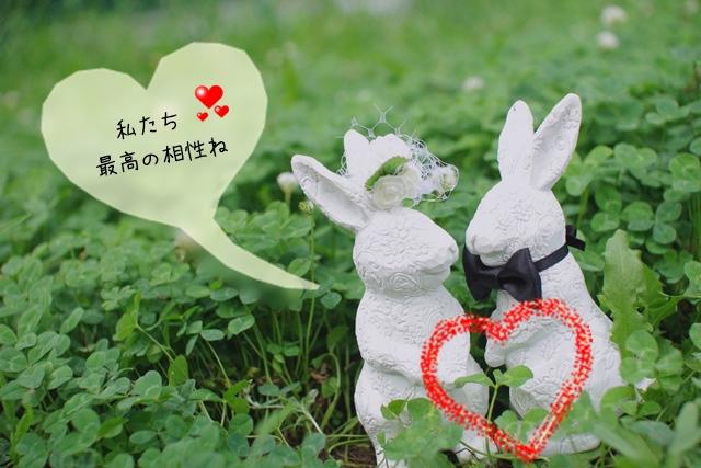 ウサギのお見合い
