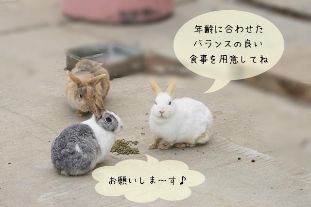 ウサギの年齢と食事