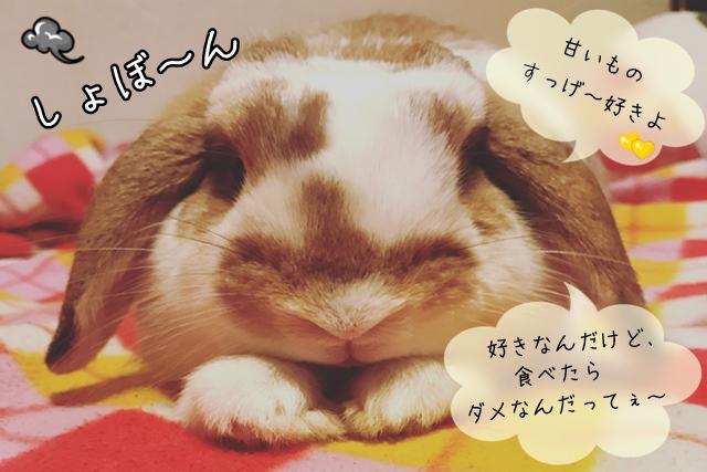 ウサギが食べてはイケナイ物