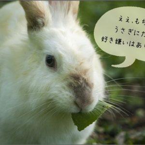 ウサギの偏食