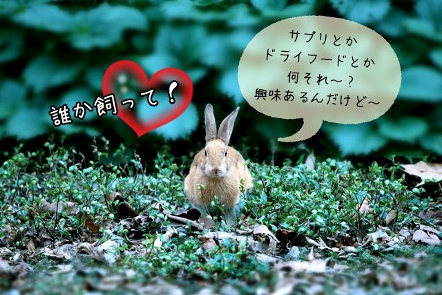 ウサギのドライフード・サプリメント