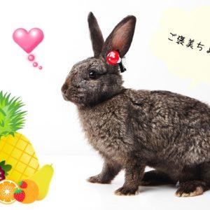 ウサギの果物