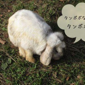 ウサギの野草