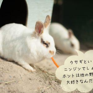 ウサギの野菜