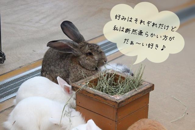 ウサギの牧草