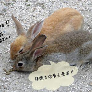 ウサギのペレット