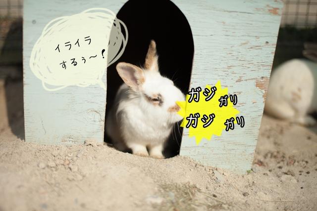ウサギの主張