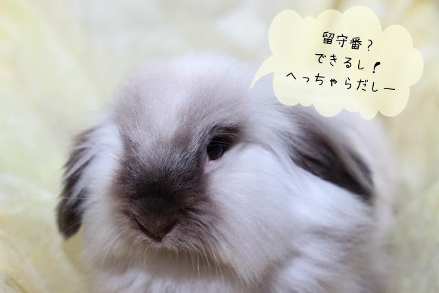 ウサギの留守番