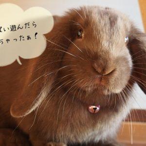 ウサギの室内遊び