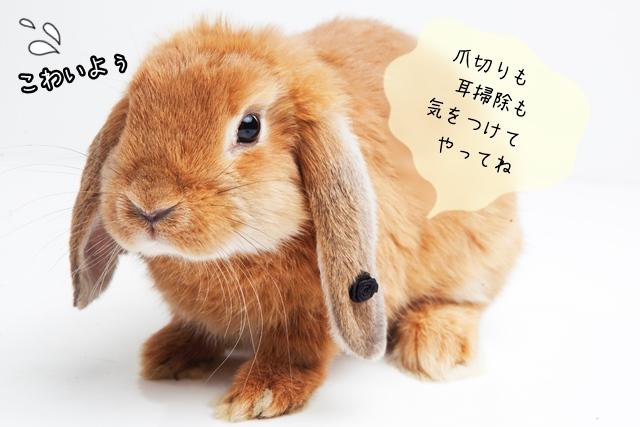 ウサギの画像 p1_16