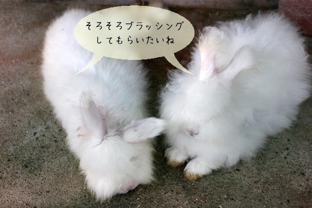 ウサギのグルーミングが重要な理由
