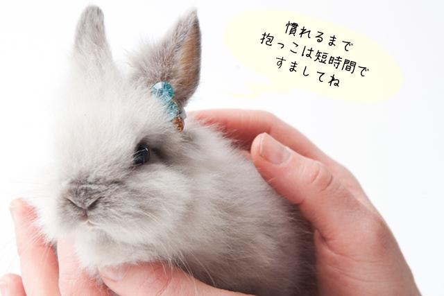 ウサギのしつけ