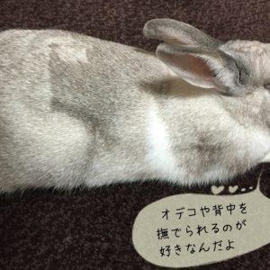 ウサギの触り方