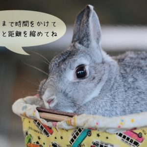 ウサギの慣らし方
