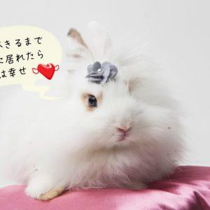 ウサギとのお別れ
