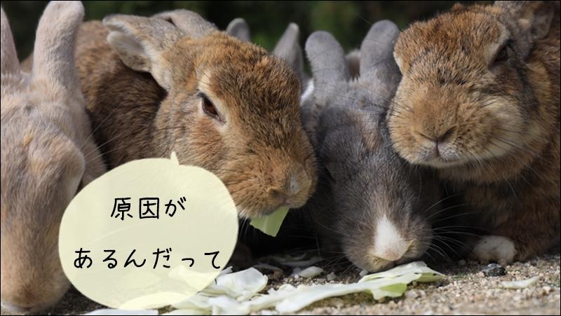 ウサギの臭い原因
