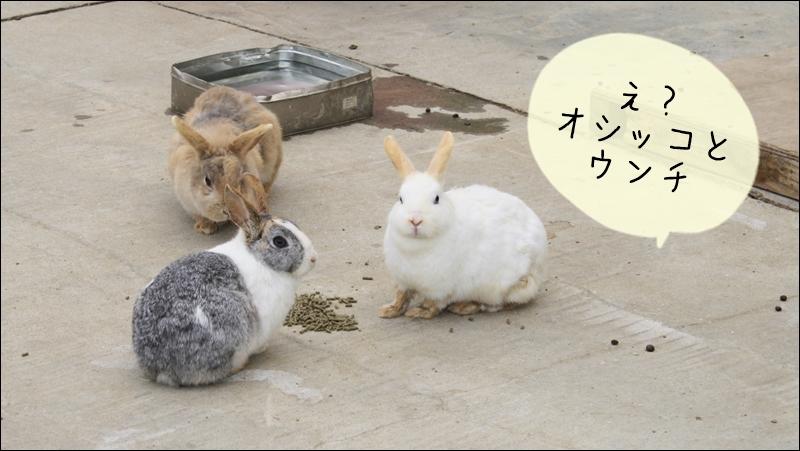 ウサギのオシッコとウンチの臭い対策