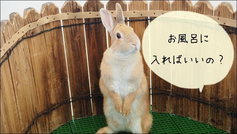 ウサギの体臭をけすには