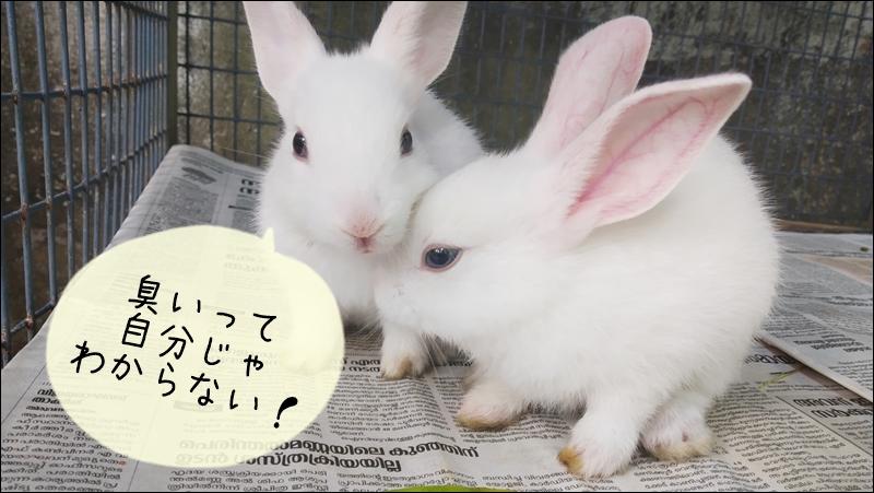 ウサギの臭いはお客さんが気がつく