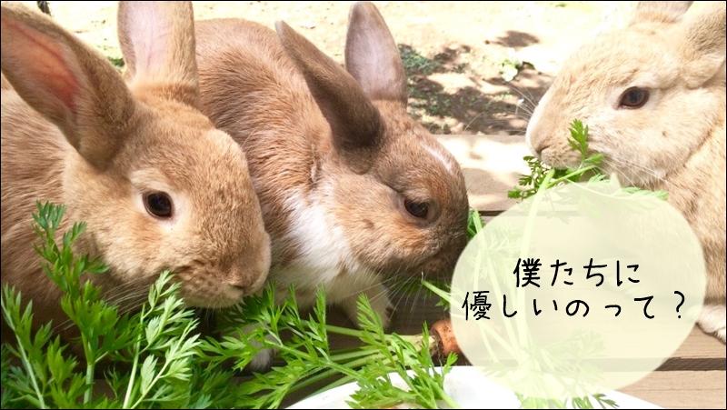 臭いに敏感なウサギ?