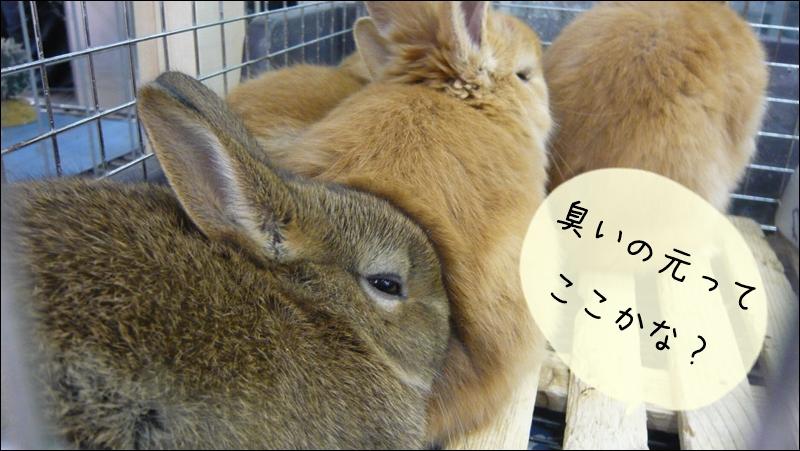 ウサギの臭い元を対策