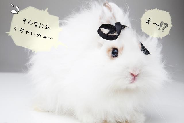 知っておきたいウサギのニオイの原因と消し方