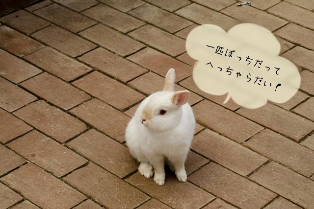 ウサギは複数で飼うよりも1匹から