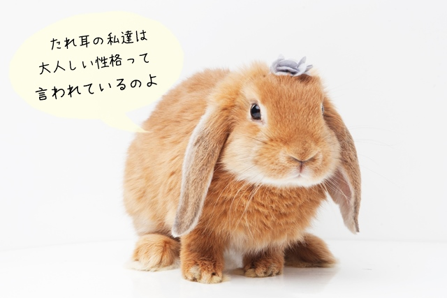飼い主と仲良くなれるウサギの選び方