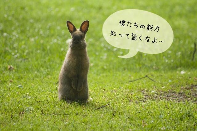 ウサギは時速何キロで走るのか、ジャンプ力と頭の良さは