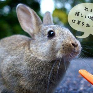 ウサギの仕草と気持ち