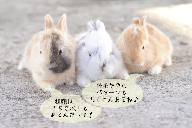 ウサギの種類の数・体毛・色