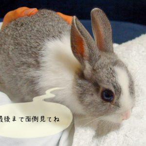 ウサギを飼う前に知っておきたい事