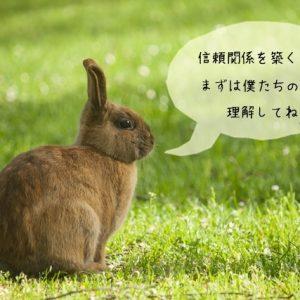 困ったウサギの行動を理解する必要性
